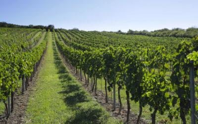 Valná hromada spolku Velká vína velkých vinic