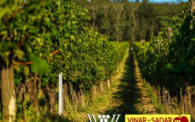 Důraz na prémiové vinice – napsali o nás v nejnovějším vydání Sadař a Vinař.