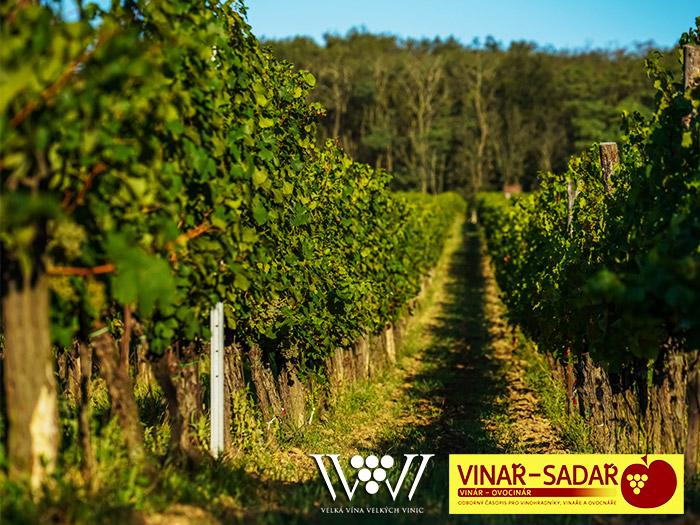 napsali o nas ve vinar a sadar Velká vína velkých vinic